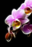 Miniatuur Orchidee Royalty-vrije Stock Afbeeldingen