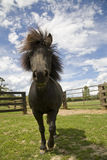 Miniatuur paard stock afbeelding