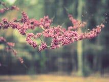 Miniatuur roze en magenta bloemen die op takken worden gegroepeerd royalty-vrije stock foto