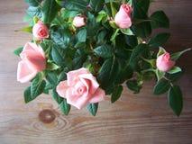 Miniatuur roze rozen royalty-vrije stock afbeeldingen