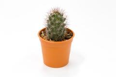 Miniatuurcactus Stock Foto's