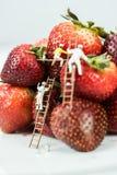 Miniatuurcijfers die Aardbeien schilderen Royalty-vrije Stock Fotografie
