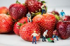 Miniatuurcijfers die Bouwwerkzaamheid op Aardbeien doen Royalty-vrije Stock Foto's