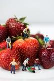 Miniatuurcijfers die Bouwwerkzaamheid op Aardbeien doen Royalty-vrije Stock Afbeeldingen