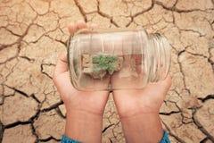 Miniatuurglaskruik met het jonge boomzaailing groeien in grond, op droog en barst leeg land van achtergrond royalty-vrije stock afbeeldingen