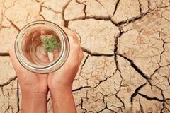 Miniatuurglaskruik met het jonge boomzaailing groeien in grond, op droog en barst leeg land van achtergrond stock foto's