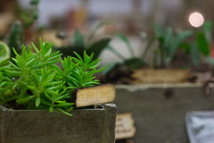 Miniatuurserre met plantersdozen Stock Fotografie