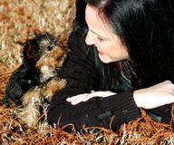 Miniatuuryorkie-Puppy Stock Foto's