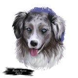 Miniatyramerikansk herde, digital konstillustration för intelligent hund Mas-fullblodet utbildade för att ta delen i sportar royaltyfri illustrationer