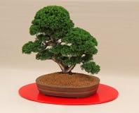 Miniatyrbonsaiträd royaltyfri foto