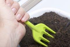 Miniatyrhjälpmedel för floriculture Små gafflar för att odla jorden i blomkrukor Arkivbilder