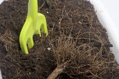 Miniatyrhjälpmedel för floriculture Små gafflar för att odla jorden i blomkrukor Royaltyfria Foton