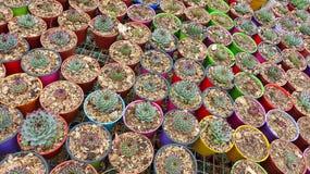 Miniatyrinlagda suckulentväxter royaltyfri fotografi
