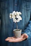 Miniatyrkörsbärsrött träd arkivfoto