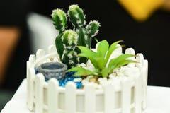 Miniatyrkaktusmakrofoto i trädgård arkivbild
