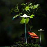 Miniatyrmossaträdgård med trähuset Royaltyfria Bilder