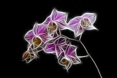 miniatyrorchid Royaltyfri Bild