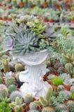 Miniatyrsuckulenta växter som dekoreras i den vita krukan Arkivbild