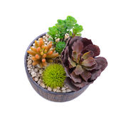 Miniatyrträdgård i en kruka Royaltyfri Bild