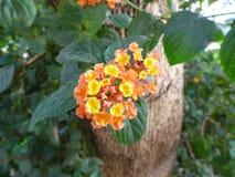 Minibloemen Oranje en Gele Bloemen Royalty-vrije Stock Foto's