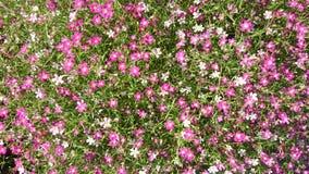 Miniflower. Flower background plant hang inflowerpot royalty free stock image