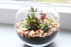 Minigarten im Glasvase Lizenzfreies Stockfoto