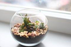 Minigarten im Glasvase Stockfoto