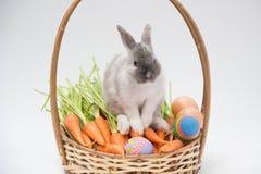 Minikaninchen mit Karotten und Osterei auf Korb lizenzfreies stockbild