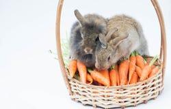 Minikonijn twee met wortelen op baske Stock Fotografie