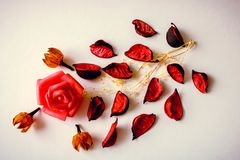 Minimaal die concept van roze bloemblaadjes en rosebud op witte achtergrond wordt gemaakt royalty-vrije stock afbeelding
