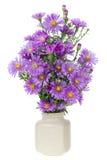 minimagentafärgade chrysanthemums Arkivbilder