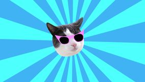 Minimal animation Motion design Fun Art. Kitty glamour style pop and party mood on multicoloured blue sunbeam background.