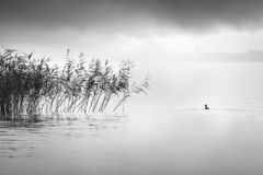 Minimal, Black and White image of plants and bird in the area of Volvi lake