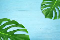Minimal composition Flat lay green tropical leaf. Creative layout tropic leaves frame with copy space on blue wood background. Summer concept royalty free stock images