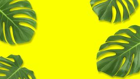 Minimal composition Flat lay green tropical leaf. Creative layout tropic leaves frame with copy space on pastel yellow background. Summer concept stock photos