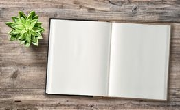 Minimal flat lay Open book succulent wooden background. Minimal flat lay. Open book and succulent plant on wooden background Royalty Free Stock Photos