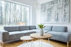 Minimal grey living room interior. Plant on wooden table near grey corner couch in minimal living room interior with painting Royalty Free Stock Photo