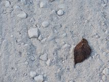 Minimal Leaf on Dirt Road Royalty Free Stock Images