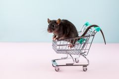 Minimal shoping concept with rat in grocery trolley. Cute home rat Royalty Free Stock Images