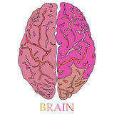 Minimal style Brain Icon Illustration Royalty Free Stock Photography