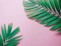 Minimal summer background concept with green palm leaf on pink p. Astel background stock photos