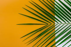 Minimal summer background concept with tropical leaves Royalty Free Stock Image