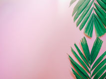 Minimal summer background concept with vertical arrange palm lea. F on pink pastel background Royalty Free Stock Image
