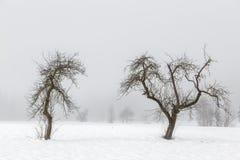 Minimal winter landscape in Slovenia-Europe. Simple, minimal winter landscape somewhere in Slovenia-Europe Royalty Free Stock Photo