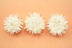 Minimale Blumenzusammensetzung gemacht von den weißen Astern auf einem blassen Pfirsichpastellhintergrund Lizenzfreie Stockfotografie
