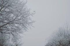 Minimale bomen Royalty-vrije Stock Fotografie