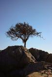 Minimale Wüstennatur des Baums Lizenzfreie Stockfotografie