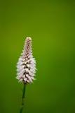Minimale wilde Blume Lizenzfreie Stockbilder