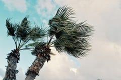 Minimales grafisches Konzeptbild von Palmen in den starken Winden vor Sturmwolken lizenzfreie stockfotografie