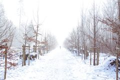 minimalism foto de archivo